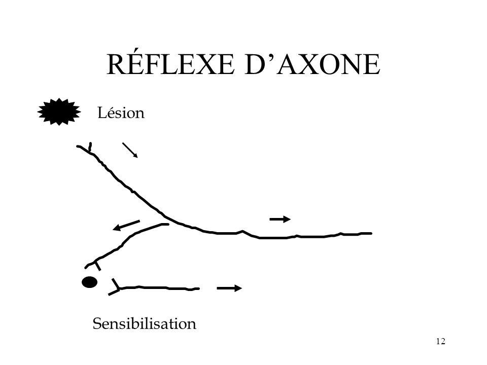 RÉFLEXE D'AXONE Lésion Sensibilisation