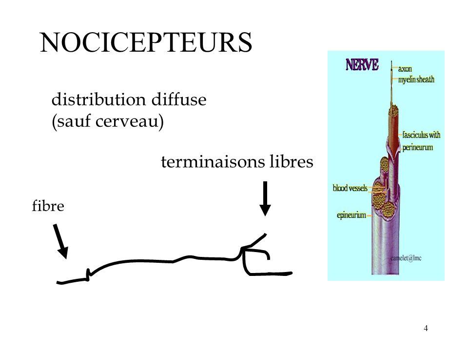 NOCICEPTEURS distribution diffuse (sauf cerveau) terminaisons libres