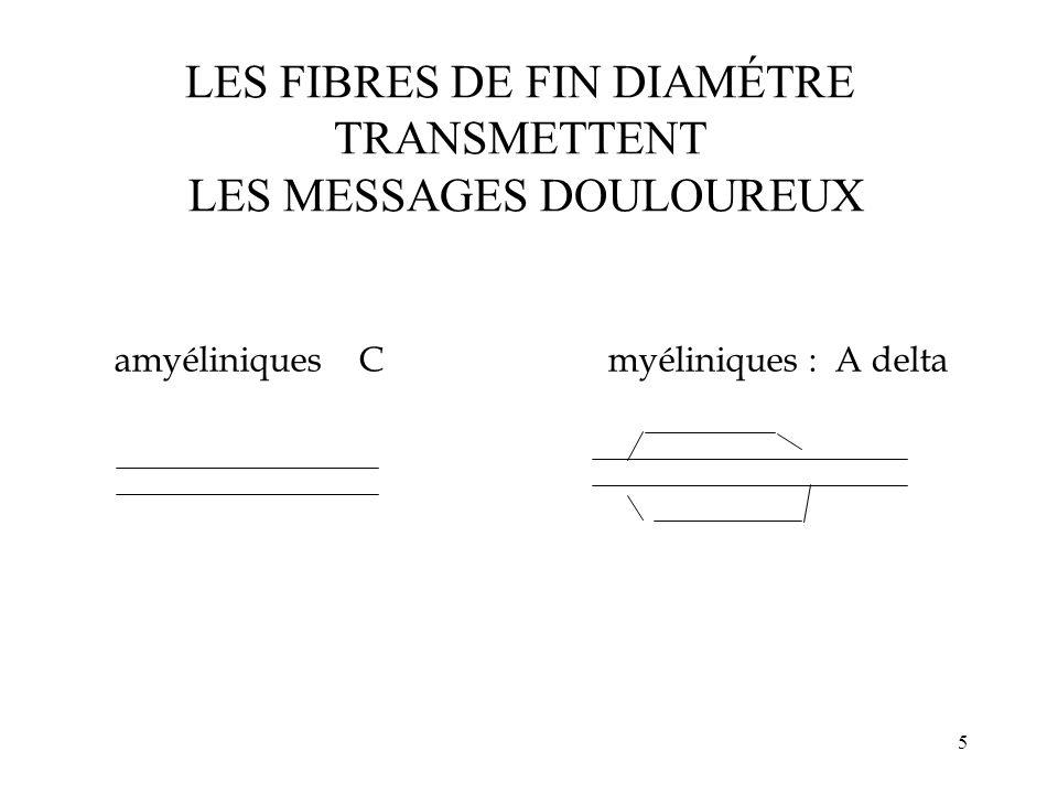 LES FIBRES DE FIN DIAMÉTRE TRANSMETTENT LES MESSAGES DOULOUREUX