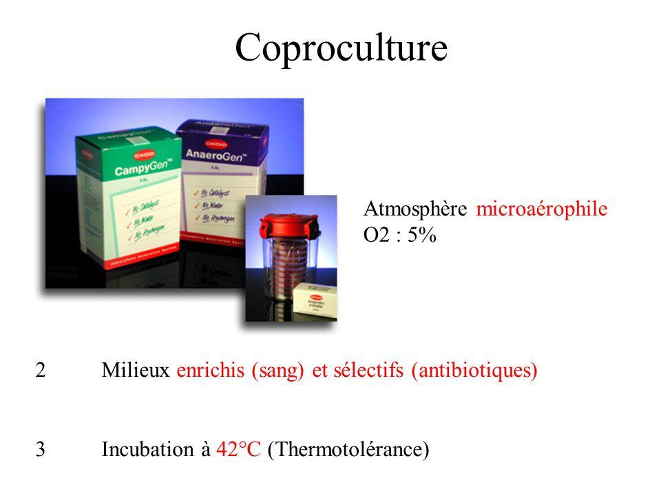 Coproculture Atmosphère microaérophile 1 O2 : 5%