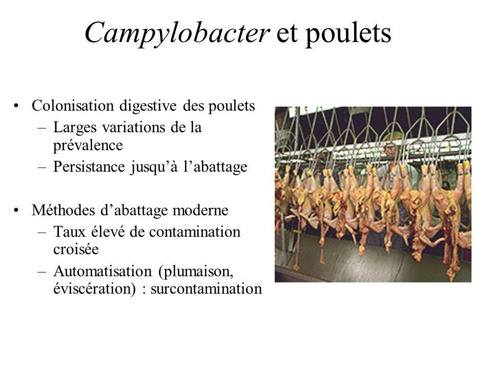 Campylobacter et poulets