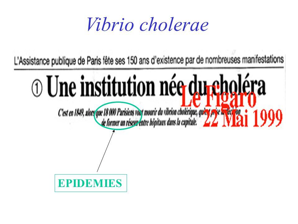 Vibrio cholerae EPIDEMIES