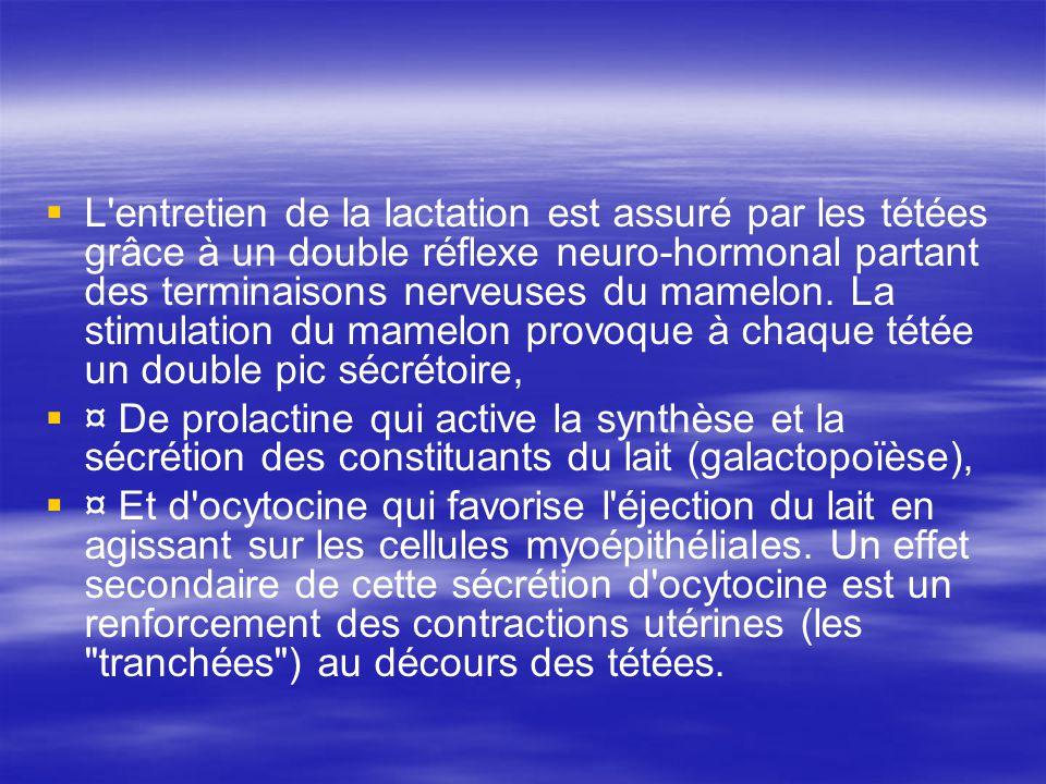 L entretien de la lactation est assuré par les tétées grâce à un double réflexe neuro-hormonal partant des terminaisons nerveuses du mamelon. La stimulation du mamelon provoque à chaque tétée un double pic sécrétoire,