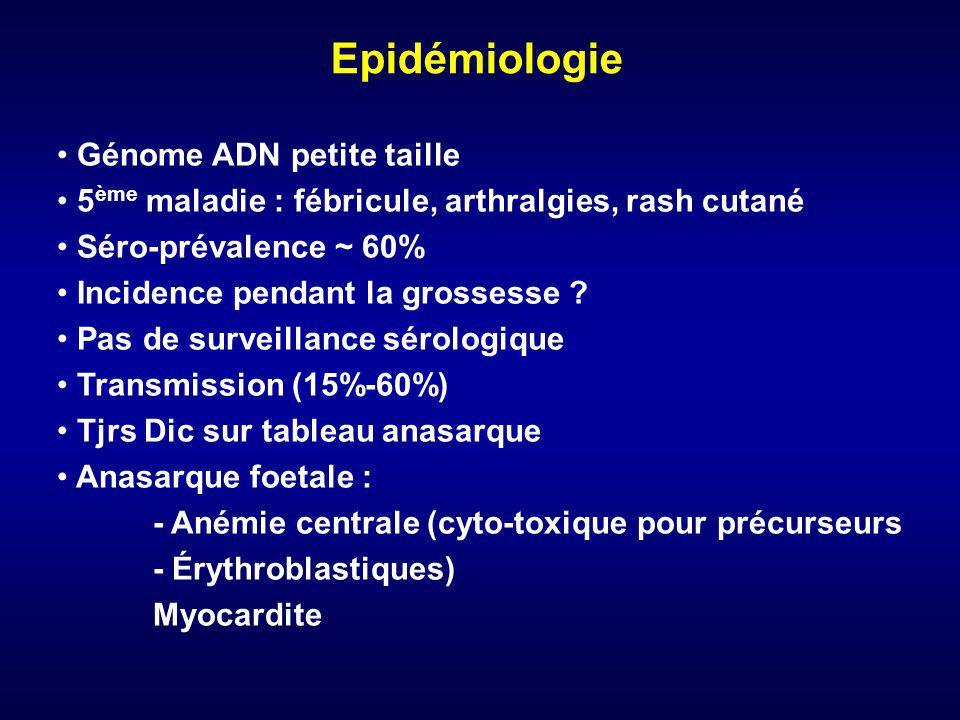 Epidémiologie Génome ADN petite taille