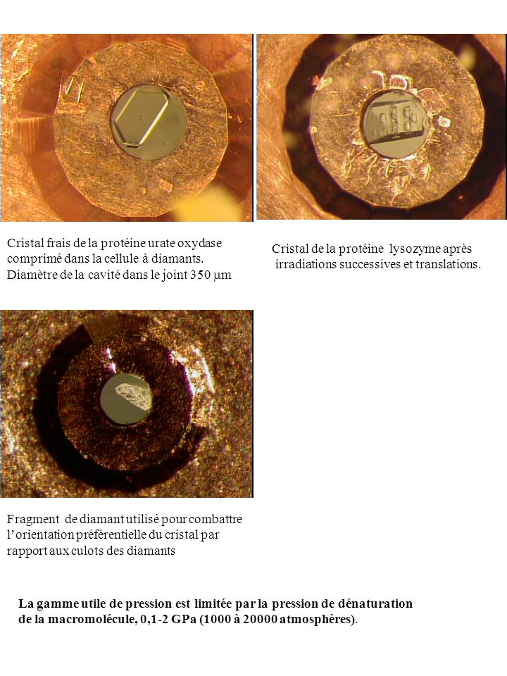 1 2 3 Cristal frais de la protéine urate oxydase