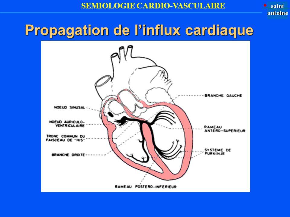 Propagation de l'influx cardiaque