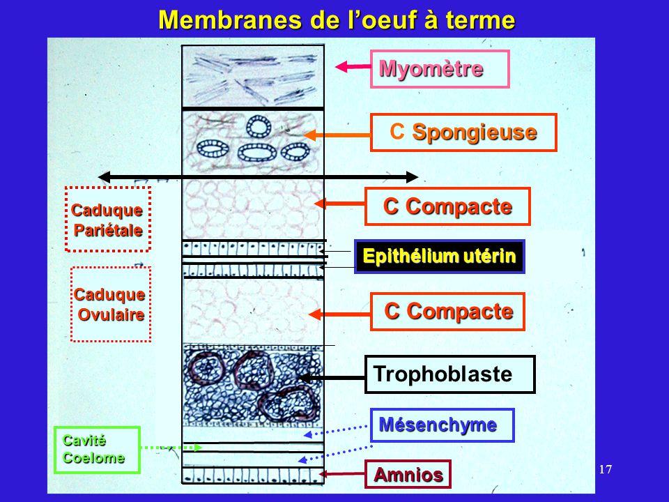 Membranes de l'oeuf à terme