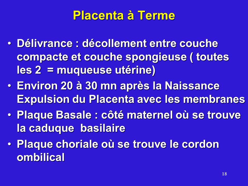 Placenta à Terme Délivrance : décollement entre couche compacte et couche spongieuse ( toutes les 2 = muqueuse utérine)