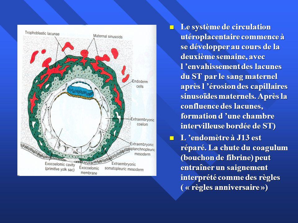 Le système de circulation utéroplacentaire commence à se développer au cours de la deuxième semaine, avec l 'envahissement des lacunes du ST par le sang maternel après l 'érosion des capillaires sinusoïdes maternels. Après la confluence des lacunes, formation d 'une chambre intervilleuse bordée de ST)