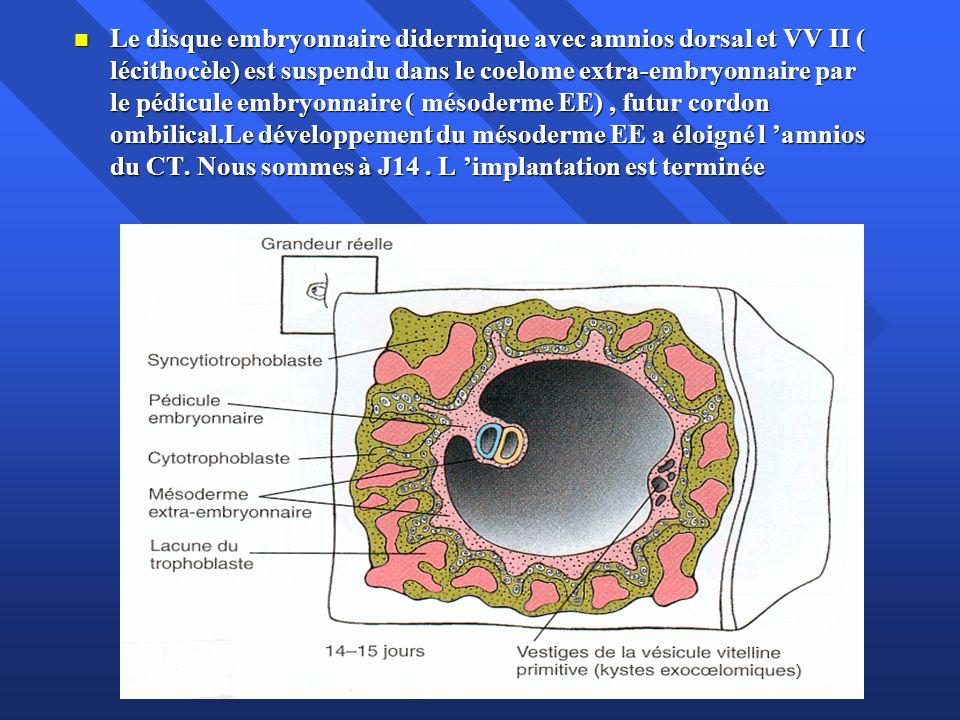 Le disque embryonnaire didermique avec amnios dorsal et VV II ( lécithocèle) est suspendu dans le coelome extra-embryonnaire par le pédicule embryonnaire ( mésoderme EE) , futur cordon ombilical.Le développement du mésoderme EE a éloigné l 'amnios du CT.