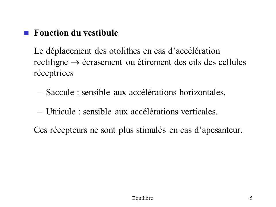 Saccule : sensible aux accélérations horizontales,