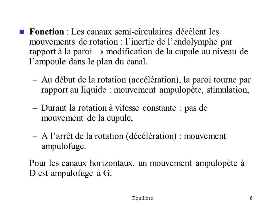 A l'arrêt de la rotation (décélération) : mouvement ampulofuge.