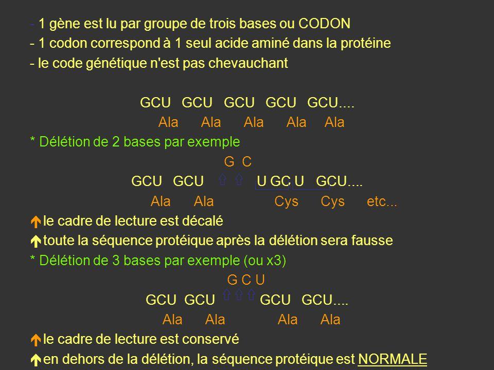 - 1 gène est lu par groupe de trois bases ou CODON