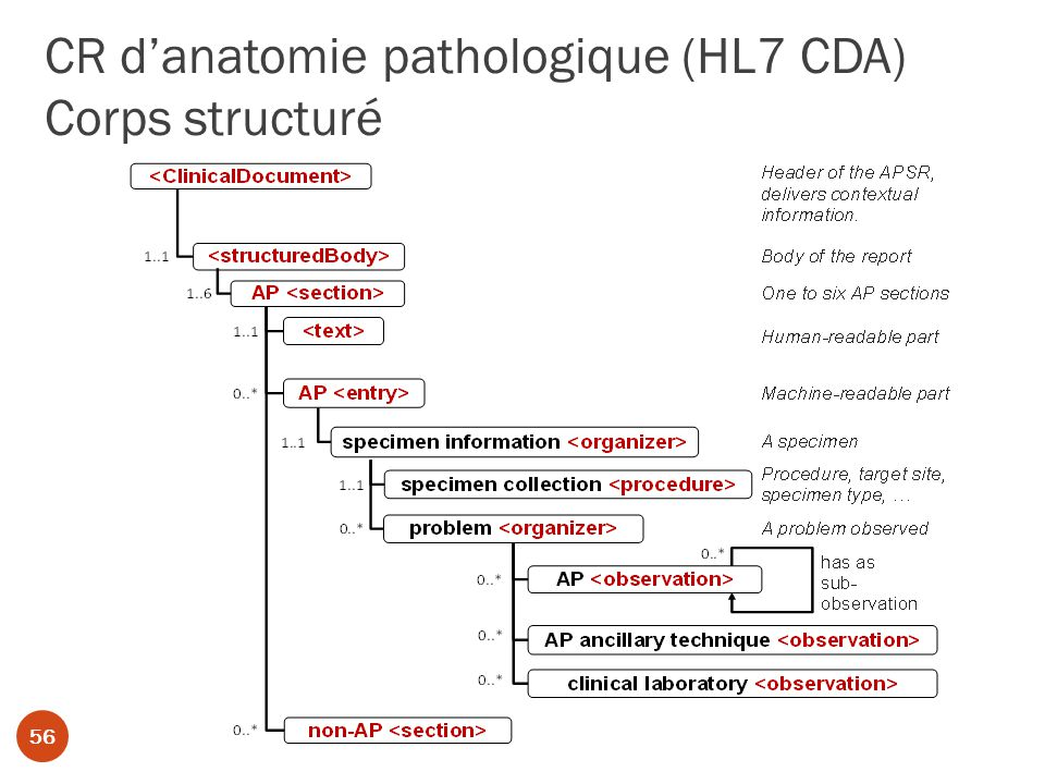 CR d'anatomie pathologique (HL7 CDA) Corps structuré