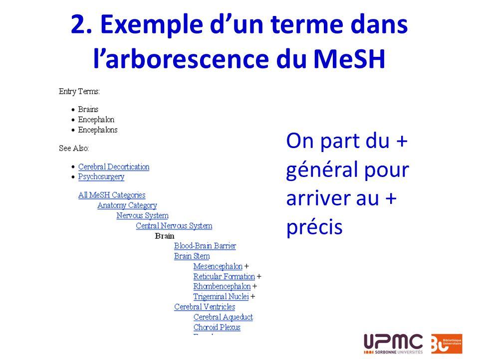 2. Exemple d'un terme dans l'arborescence du MeSH