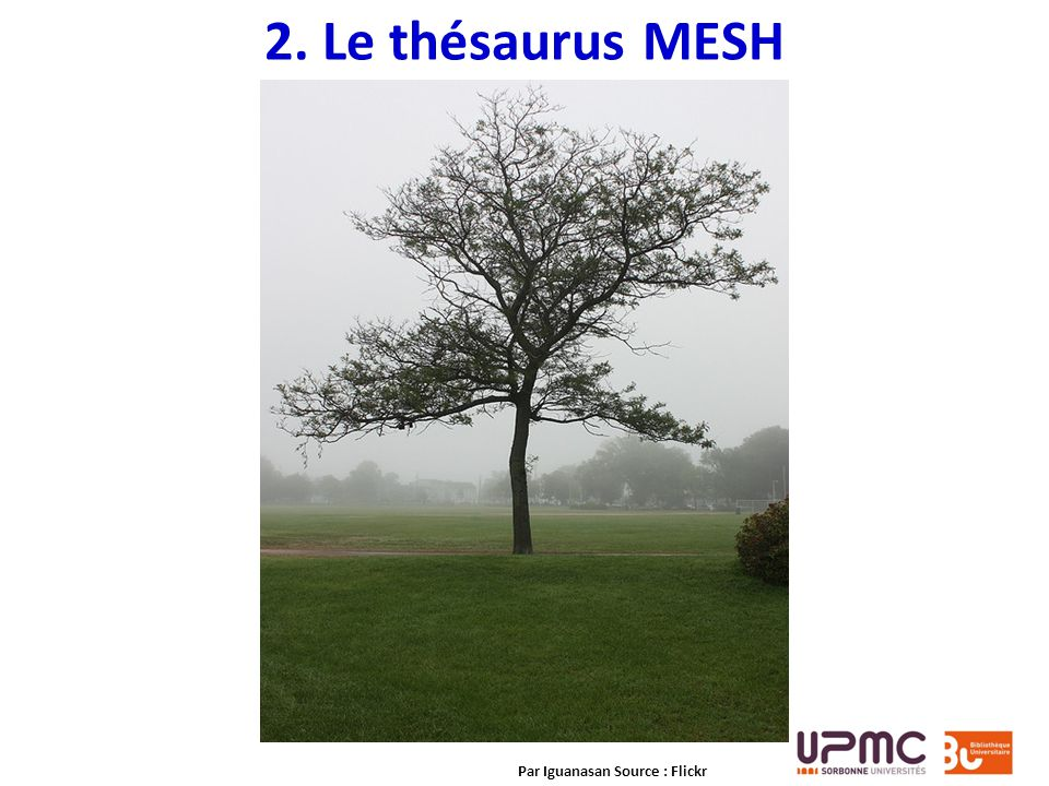 2. Le thésaurus MESH Par Iguanasan Source : Flickr
