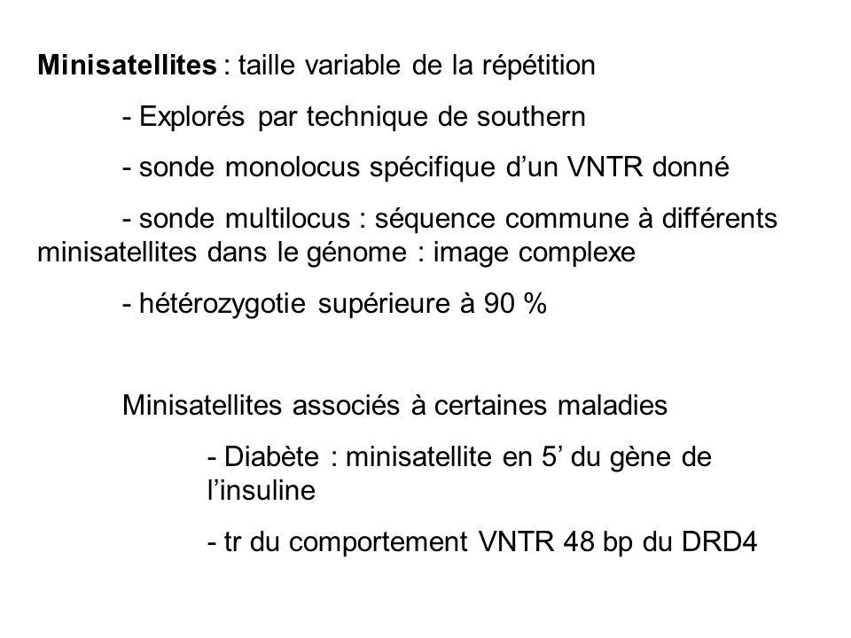 Minisatellites : taille variable de la répétition
