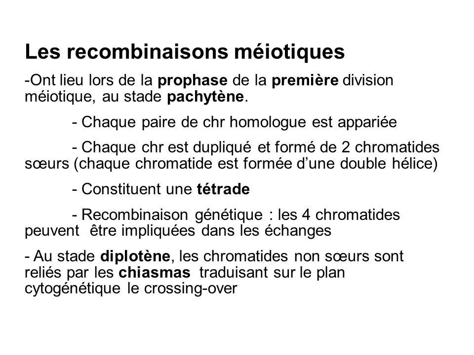 Les recombinaisons méiotiques