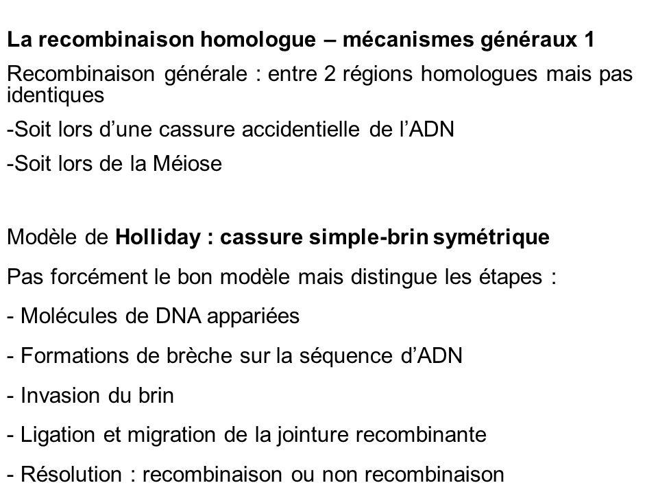La recombinaison homologue – mécanismes généraux 1