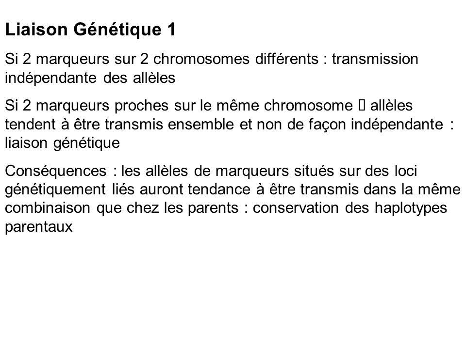 Liaison Génétique 1 Si 2 marqueurs sur 2 chromosomes différents : transmission indépendante des allèles.