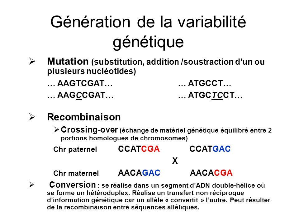 Génération de la variabilité génétique