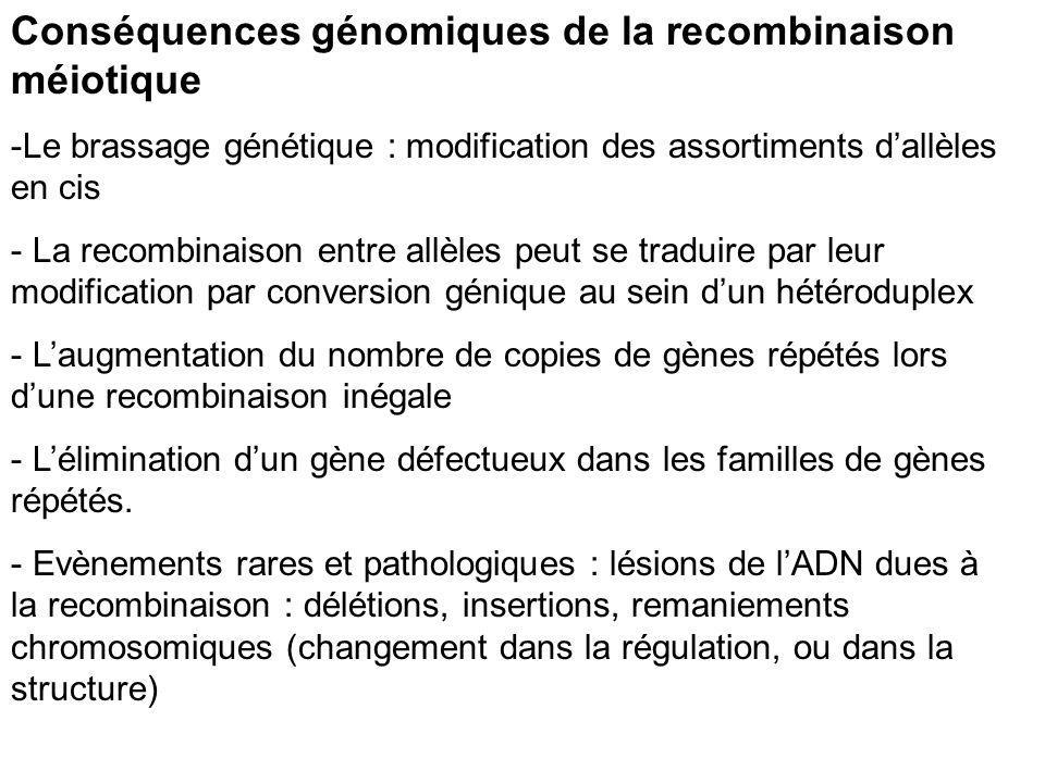 Conséquences génomiques de la recombinaison méiotique