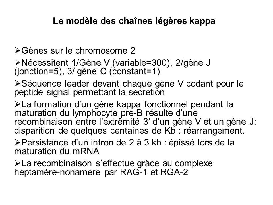 Le modèle des chaînes légères kappa