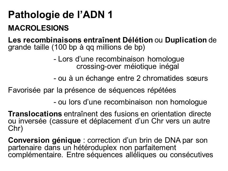 Pathologie de l'ADN 1 MACROLESIONS