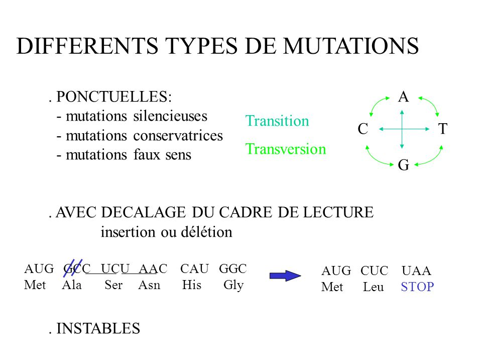 DIFFERENTS TYPES DE MUTATIONS