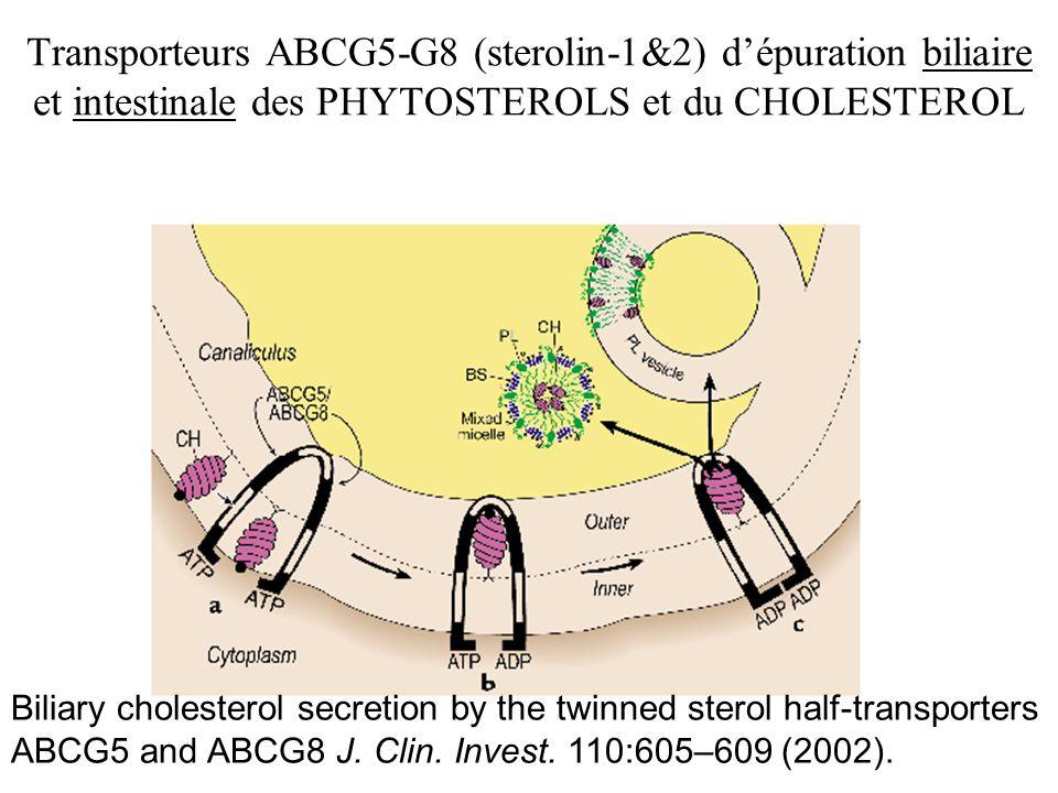 Transporteurs ABCG5-G8 (sterolin-1&2) d'épuration biliaire et intestinale des PHYTOSTEROLS et du CHOLESTEROL
