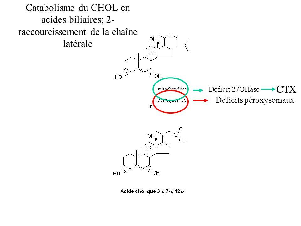 Catabolisme du CHOL en acides biliaires; 2-raccourcissement de la chaîne latérale