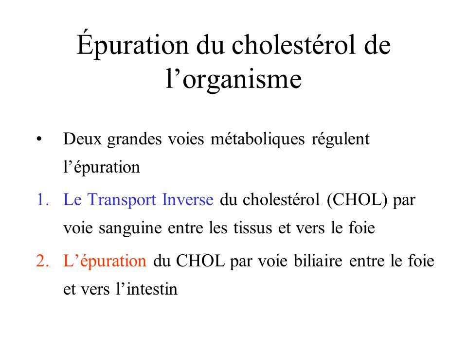 Épuration du cholestérol de l'organisme