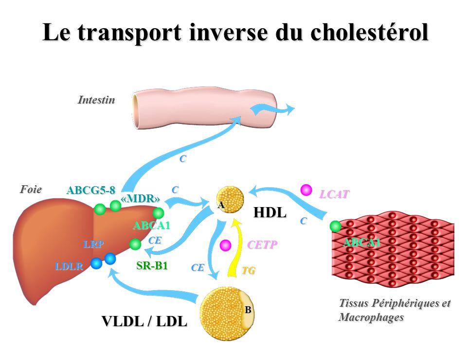 Le transport inverse du cholestérol