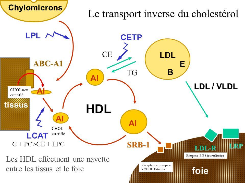 HDL Le transport inverse du cholestérol foie Chylomicrons LPL CETP CE