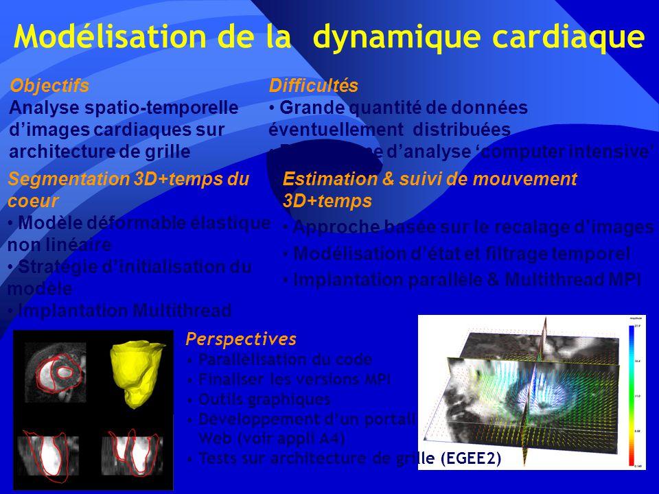 Modélisation de la dynamique cardiaque