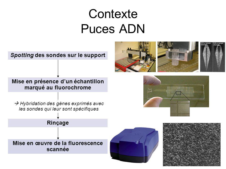 Contexte Puces ADN Spotting des sondes sur le support
