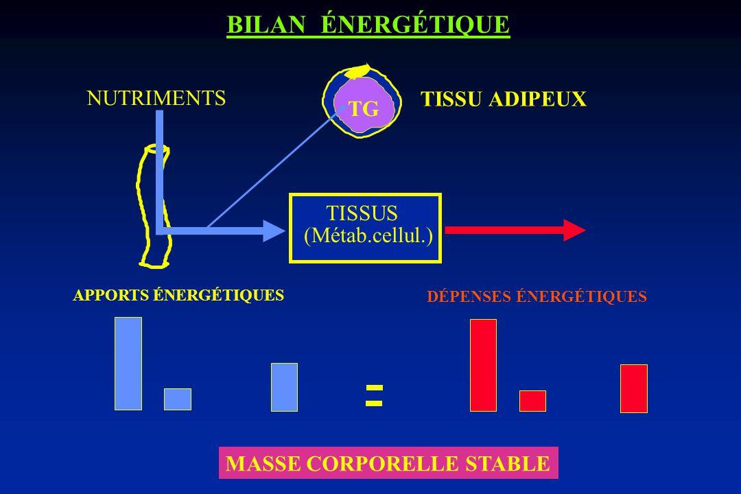 BILAN ÉNERGÉTIQUE NUTRIMENTS TISSU ADIPEUX TG TISSUS (Métab.cellul.)
