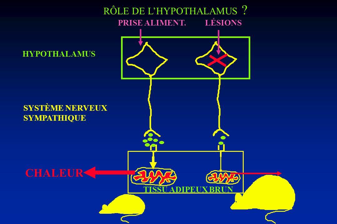 CHALEUR RÔLE DE L'HYPOTHALAMUS PRISE ALIMENT. LÉSIONS HYPOTHALAMUS
