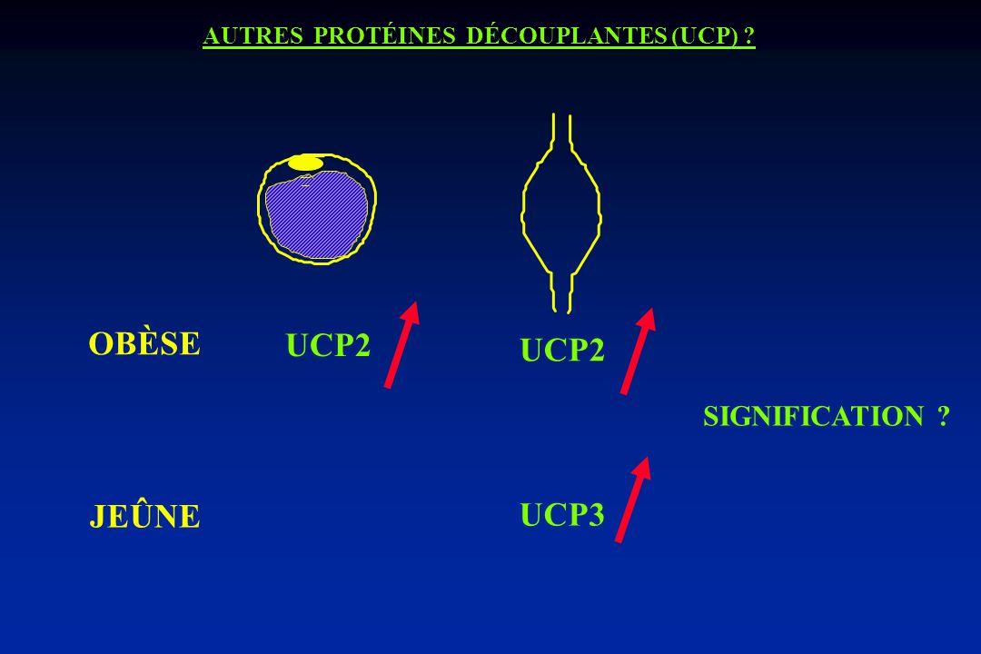 OBÈSE UCP2 JEÛNE UCP3 SIGNIFICATION