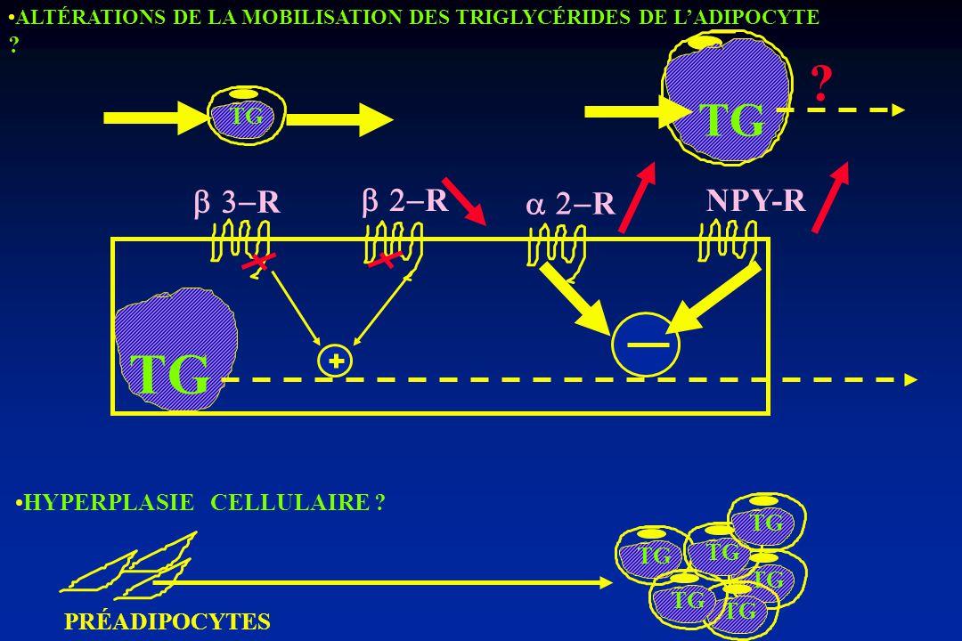 TG TG R R R NPY-R TG HYPERPLASIE CELLULAIRE TG