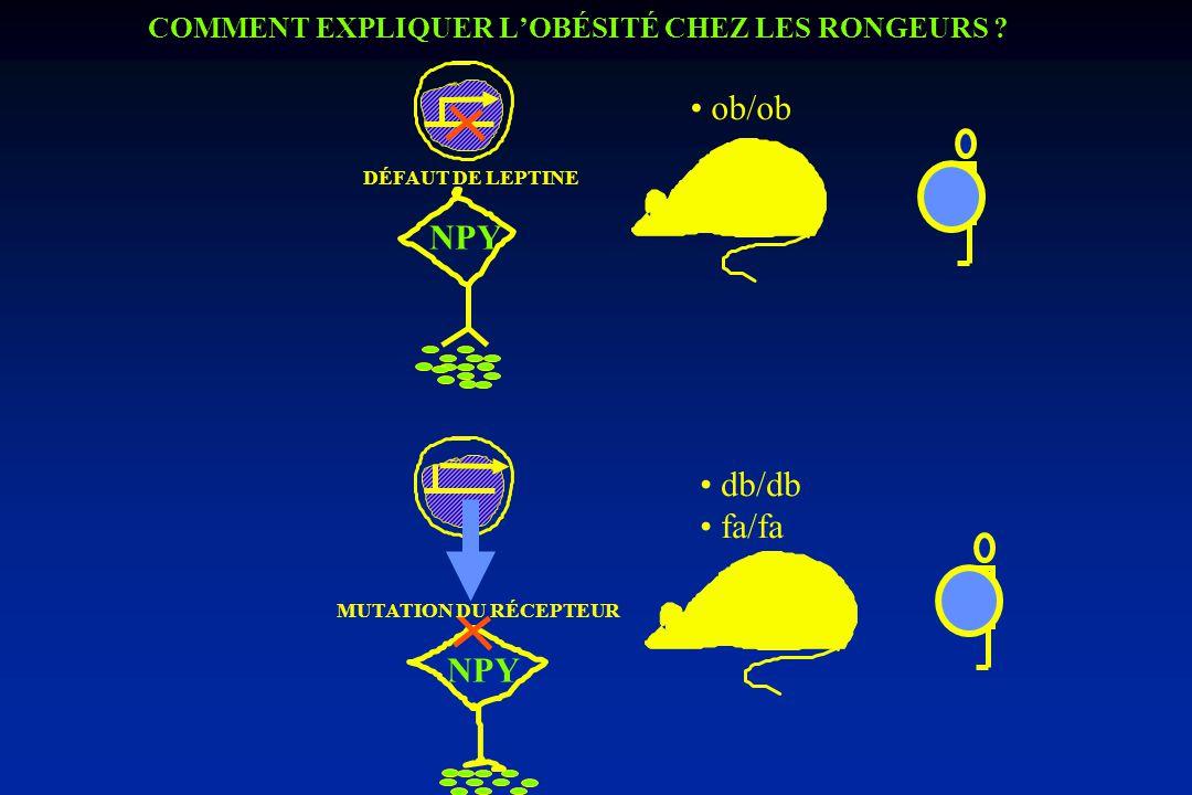 COMMENT EXPLIQUER L'OBÉSITÉ CHEZ LES RONGEURS