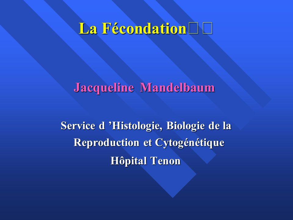 La Fécondation Jacqueline Mandelbaum