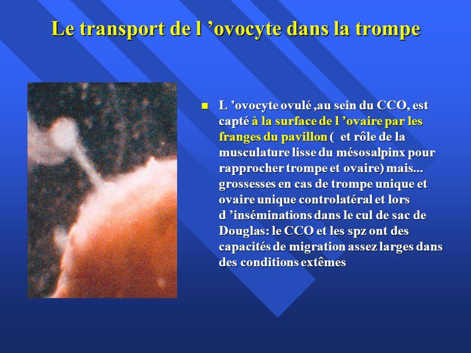 Le transport de l 'ovocyte dans la trompe