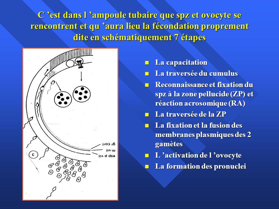 C 'est dans l 'ampoule tubaire que spz et ovocyte se rencontrent et qu 'aura lieu la fécondation proprement dite en schématiquement 7 étapes