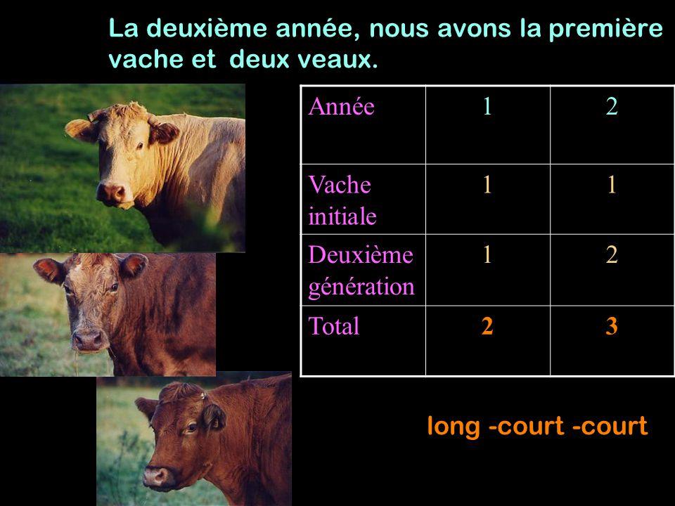 La deuxième année, nous avons la première vache et deux veaux.