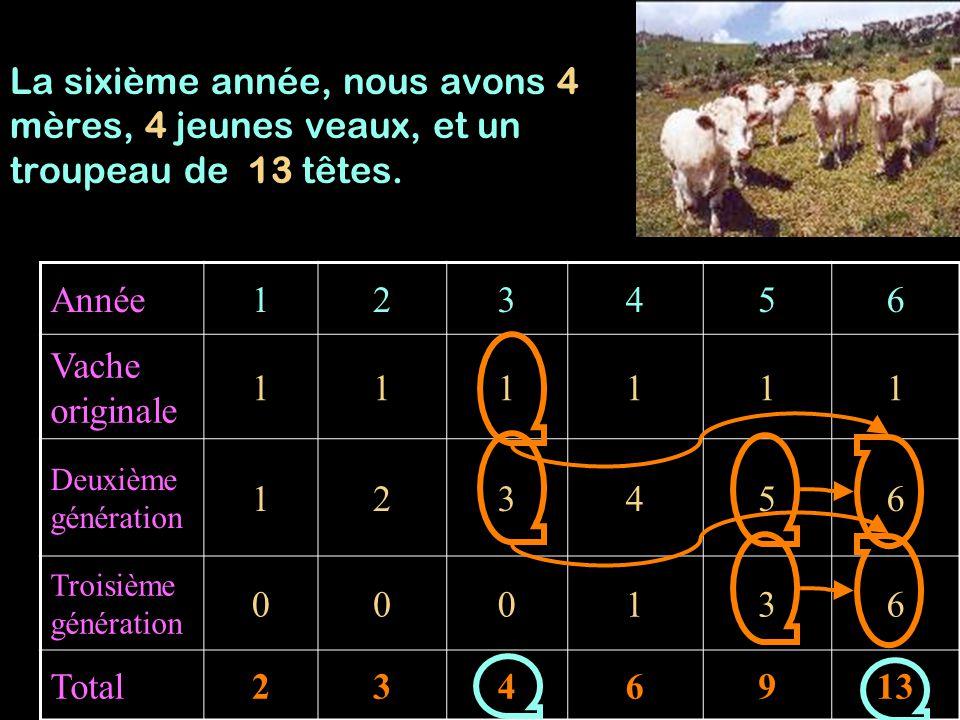La sixième année, nous avons 4 mères, 4 jeunes veaux, et un troupeau de 13 têtes.