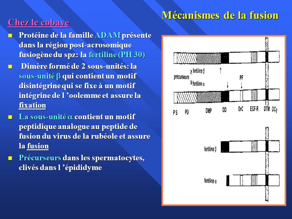 Mécanismes de la fusion