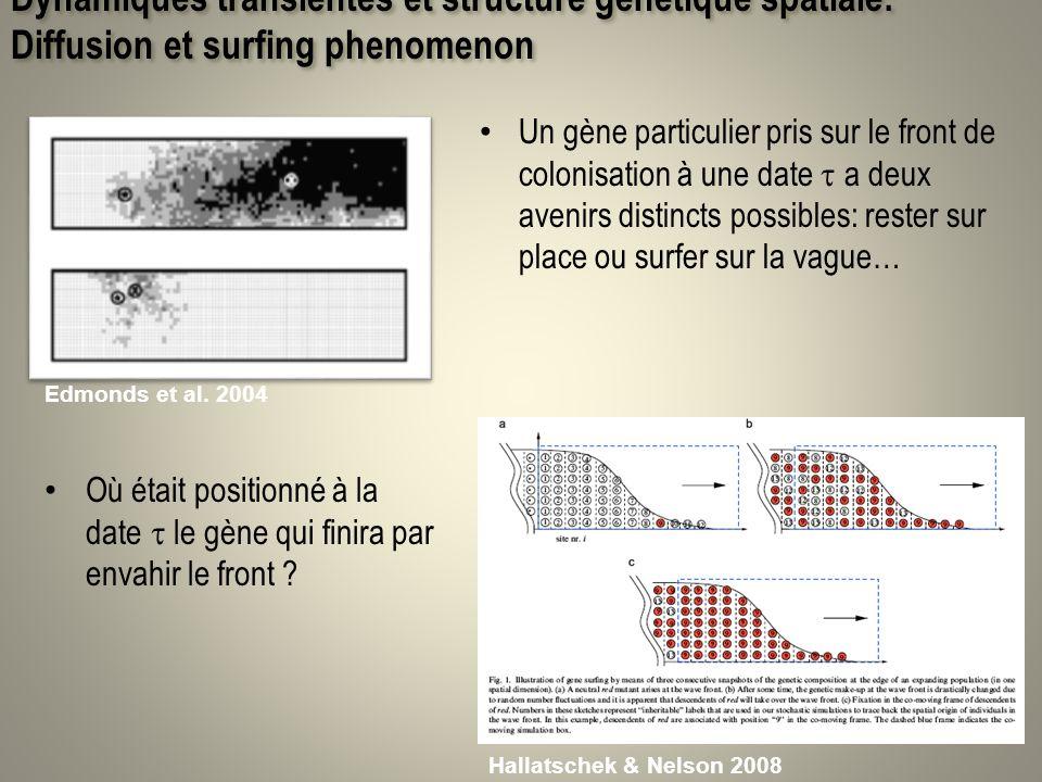 Dynamiques transientes et structure génétique spatiale: Diffusion et surfing phenomenon