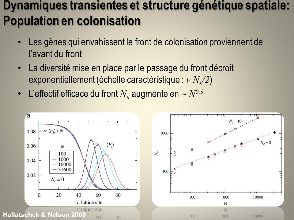 Dynamiques transientes et structure génétique spatiale: Population en colonisation