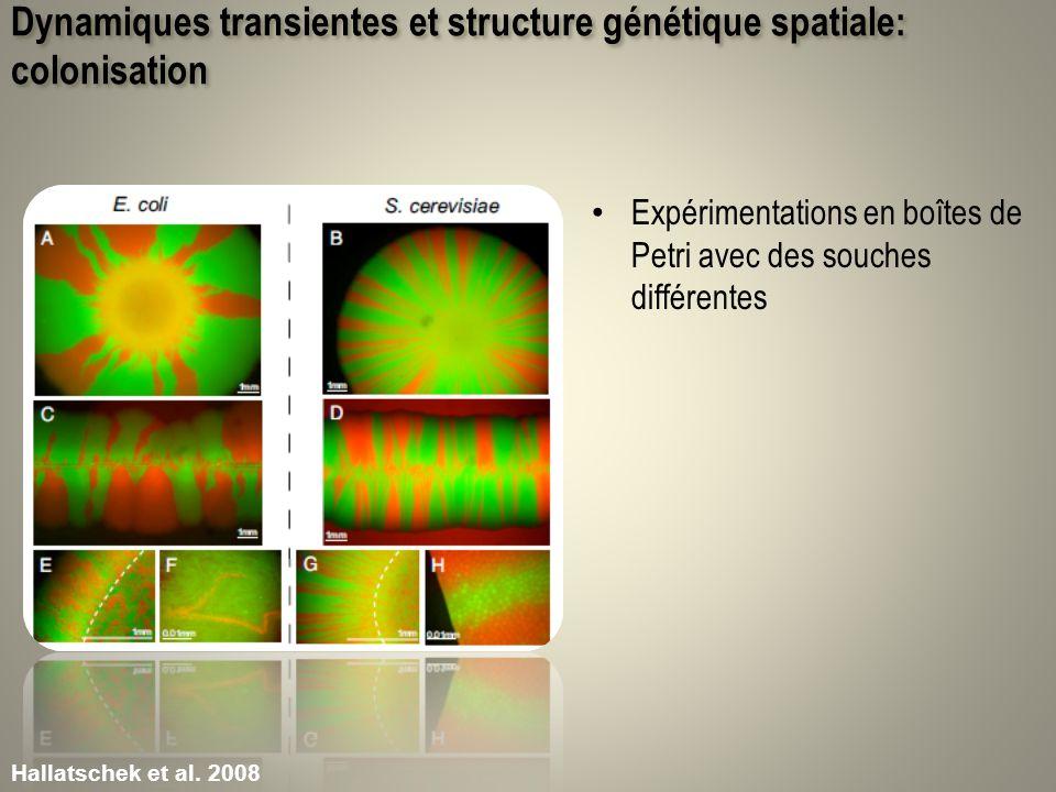 Dynamiques transientes et structure génétique spatiale: colonisation